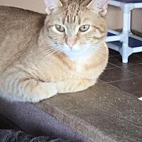 Adopt A Pet :: Buffy - Martinsburg, WV