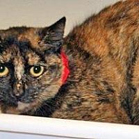 Domestic Shorthair Cat for adoption in Wildomar, California - Marlene