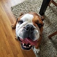 Adopt A Pet :: George - Santa Ana, CA