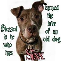 Adopt A Pet :: Sixx - Des Moines, IA