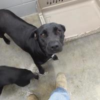 Adopt A Pet :: Big Momma - Amory, MS