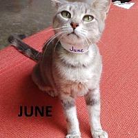 Adopt A Pet :: June - Mountain View, AR