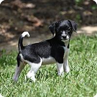 Adopt A Pet :: Demi - Groton, MA
