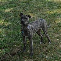 Adopt A Pet :: Barin - holton, KS