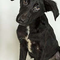 Adopt A Pet :: Jones - Baton Rouge, LA