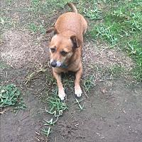 Adopt A Pet :: Mandy - Fountain Valley, CA