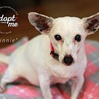 Adopt A Pet :: Minnie - Mount Laurel, NJ