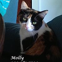Adopt A Pet :: Mild MOLLY - Monrovia, CA