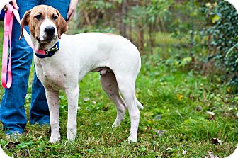 Hound (Unknown Type) Mix Dog for adoption in Houston, Texas - Nibbles