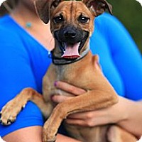 Adopt A Pet :: PANCHITO - Miami, FL