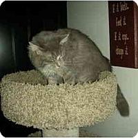 Adopt A Pet :: BartholoMEW - Washington Terrace, UT