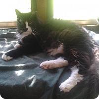Adopt A Pet :: Raine - Andover, KS