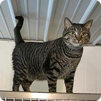 Adopt A Pet :: Rowdy2 - Geneseo, IL