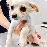 Adopt A Pet :: Casper - Christiana, TN