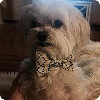 Adopt A Pet :: Cooper (2017) - Rochester, MN