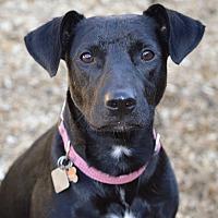 Adopt A Pet :: Annabelle - Frisco, TX