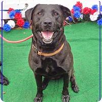 Adopt A Pet :: EVE see also ADAM - Marietta, GA