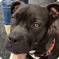 Adopt A Pet :: Freddy - Essington, PA