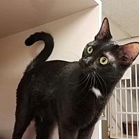Adopt A Pet :: C-2 - Indianola, IA