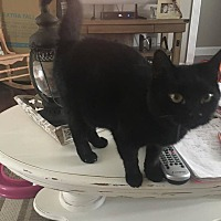 Adopt A Pet :: Raven - Jerseyville, IL