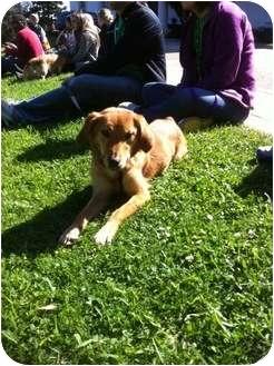 Terrier (Unknown Type, Medium)/Feist Mix Dog for adoption in Baton Rouge, Louisiana - Olivia
