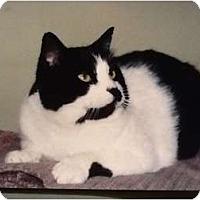 Adopt A Pet :: Huckleberry - Buffalo, NY