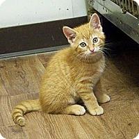 Adopt A Pet :: Tot - Dover, OH