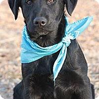Adopt A Pet :: JUDD - Glastonbury, CT
