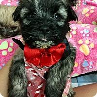 Adopt A Pet :: Stripes - Brea, CA