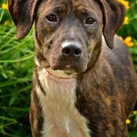 Adopt A Pet :: Leslie/Jericho - Fort Smith, AR