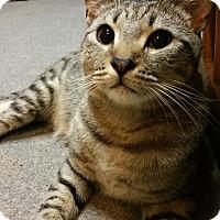 Adopt A Pet :: Aragon - Morganton, NC