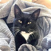 Adopt A Pet :: Bella - Alameda, CA