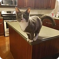 Adopt A Pet :: ODIN - Woodstock, GA