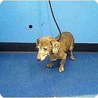 Adopt A Pet :: Frank - Killingworth, CT