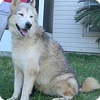 Adopt A Pet :: Storm - Jacksonville, FL