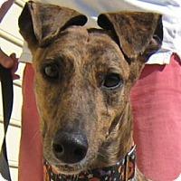 Adopt A Pet :: Hattie - Oak Ridge, NC