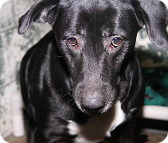 Labrador Retriever Mix Dog for adoption in Marietta, Ohio - Winnie