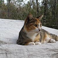 Adopt A Pet :: Callie - Bronson, FL