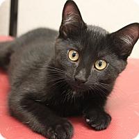 Adopt A Pet :: Fudge - Naperville, IL