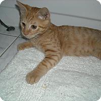Adopt A Pet :: Marlow-ADOPTION PENDING - Arlington, VA