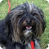 Adopt A Pet :: Bubbles - Bunnell, FL