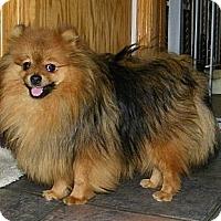 Adopt A Pet :: Dice - Mt Gretna, PA