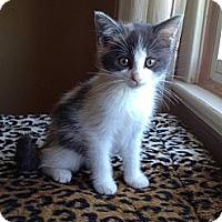 Adopt A Pet :: Cleo - Douglas, ON