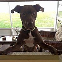 Hound (Unknown Type) Mix Dog for adoption in Brooksville, Florida - Baxter
