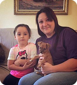 Yorkie, Yorkshire Terrier/Dachshund Mix Puppy for adoption in Sacramento, California - Bud
