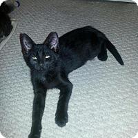 Adopt A Pet :: Rachel - Raritan, NJ