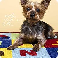Adopt A Pet :: Rocky - Baton Rouge, LA