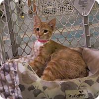 Adopt A Pet :: Lilliana - Geneseo, IL