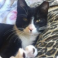 Adopt A Pet :: Bowie - West Palm Beach, FL