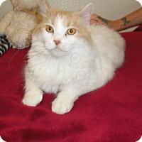 Adopt A Pet :: FELICITY - Medford, WI